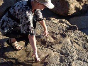 Dinosaur footprints_Broome, NT, Australia