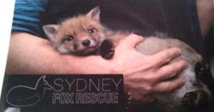 Sydney Fox Rescue