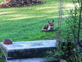 Le Fox