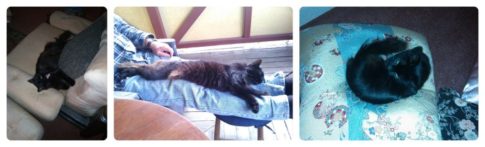 A Soossie-Cat's life at Taylors Arm