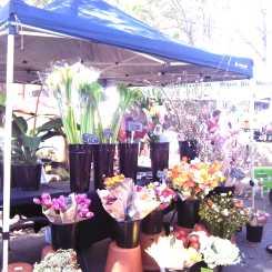 Marrickville Markets_Wordpress_4
