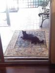 Soossie Cat visits
