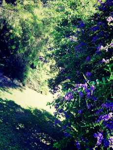 green and purple jungle
