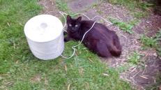 Soossie Cat helper