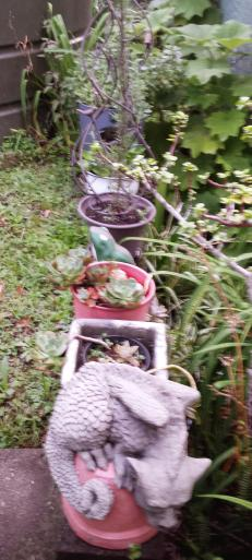 Garden pots and ornaments at the back step