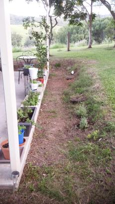 Planting the bank with ground covers