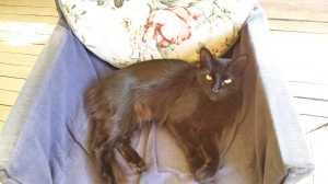 Soossie Cat, furry treasure