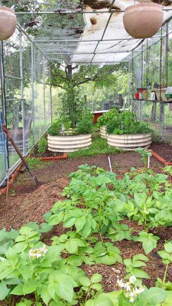 vege garden 1
