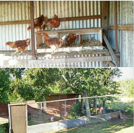 A fowl joint venture with our LHS neighbour... The Girls and the Chook Hilton renovated by the G.O.