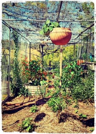 New Image garden