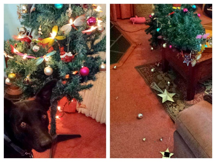 our christmas tree suffered collateral damage from a christmas morning altercation between deez-dog and his new squeaky pig toy