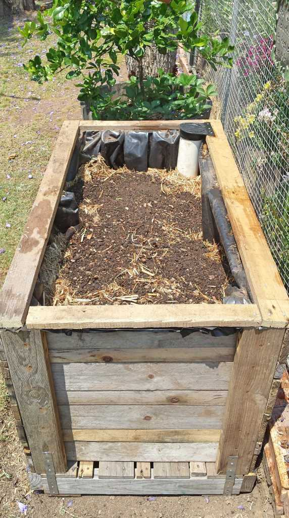 Lasagne-no dig garden: layers of recycled soil from excavation, green garden clippings, sugarcane mulch, Dinofert, aged cow manure, newspaper - watered at each layer.