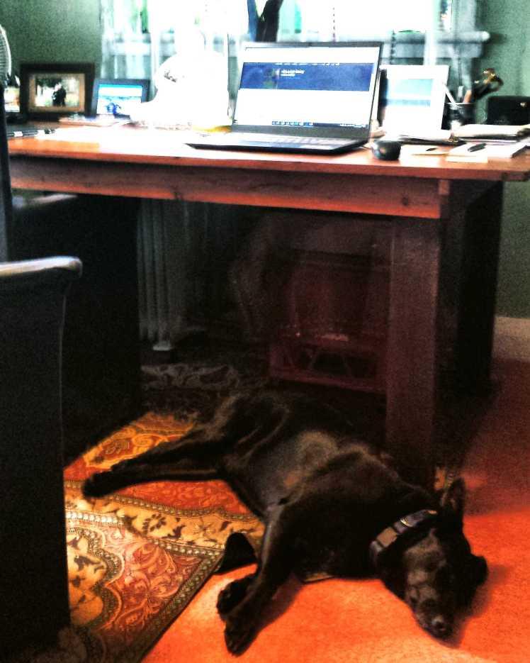 Deez under desk