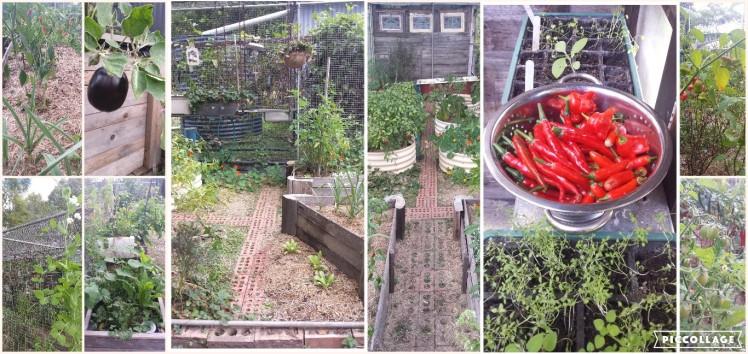 Collage in my garden