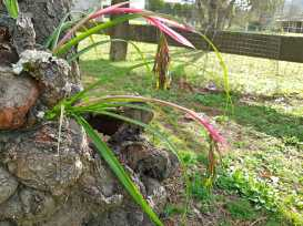 garden_bromeliad