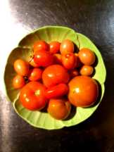 Kitchen_homegrown tomatoes