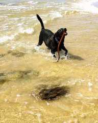 Birthday Beach Dog