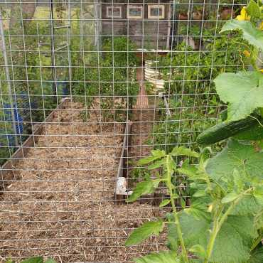 #inmygarden_cleaned up and mulched caged garden