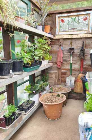 #inmygarden_tidy shed.