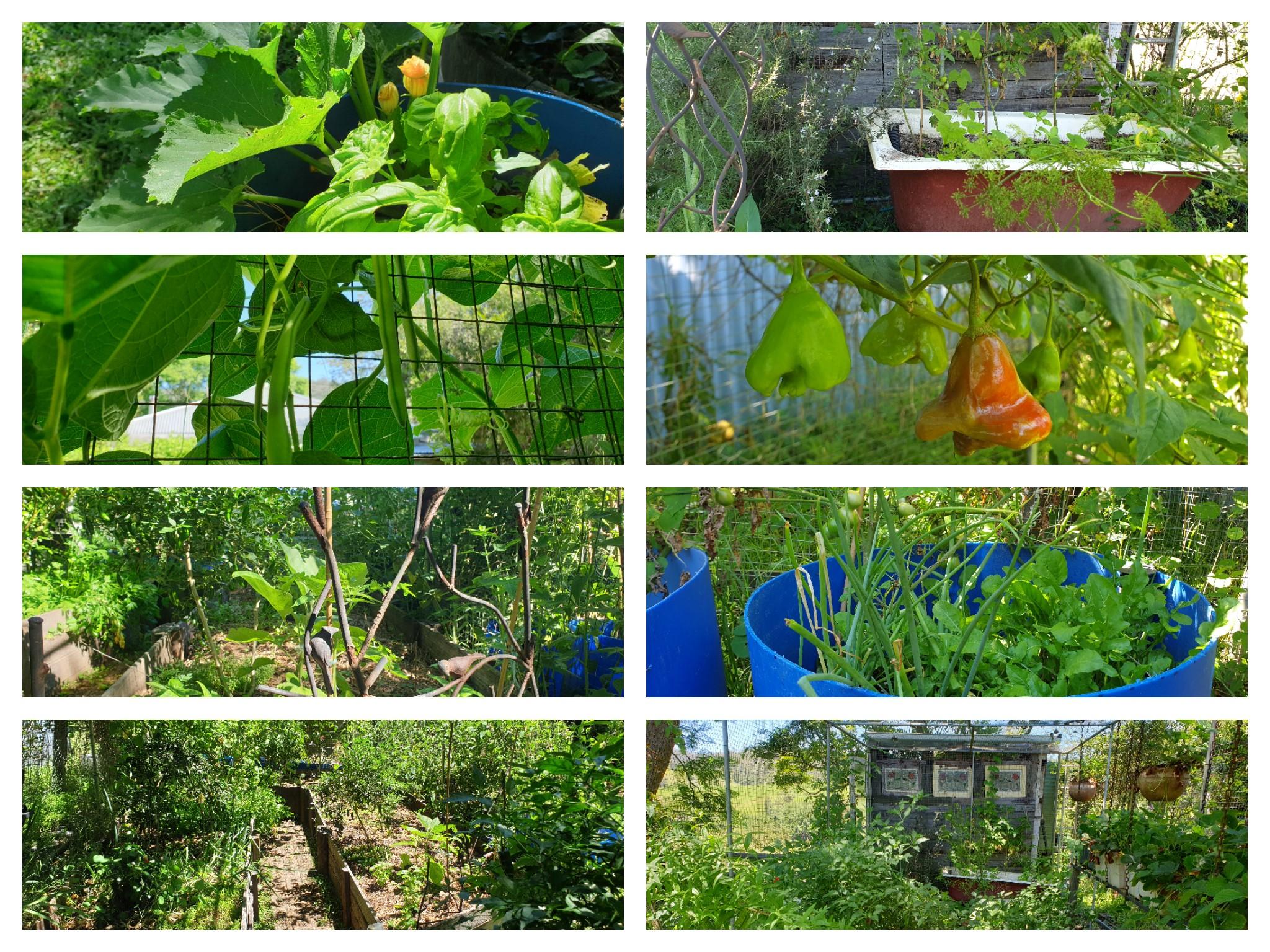 in my garden_03