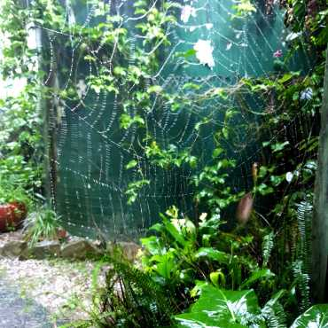 Spiderweb in the rain...