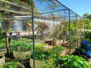 Edibles cage garden. After the choko and passionfruit vines removed #inmygarden.