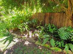 Red Back Australian Ginger and galangal added to the ginger and turmeric bed #inmygarden.