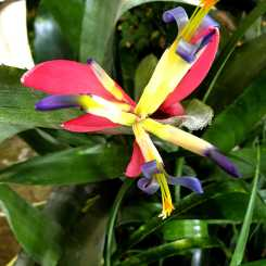 Look on the bright side: Bromeliad in my winter garden