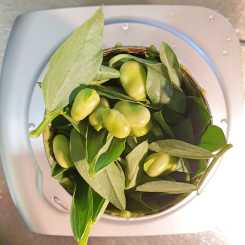 Broad beans pods and tips... small batch life #inmykitchen.